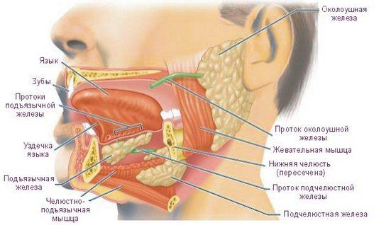 Народные лечение для спины грыжа