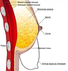 Какие витамины пить чтобы увеличить грудь