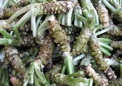 Васаби - японское растение семейства Капустные