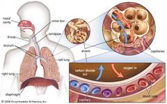 Метод сильва диабет
