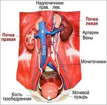 Гиперурикемия – причины, симптомы, диета, лечение