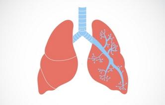 8 факторов, вредящих здоровью легких