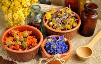 Аптекарский огород: лекарственные растения, которые можно вырастить на даче