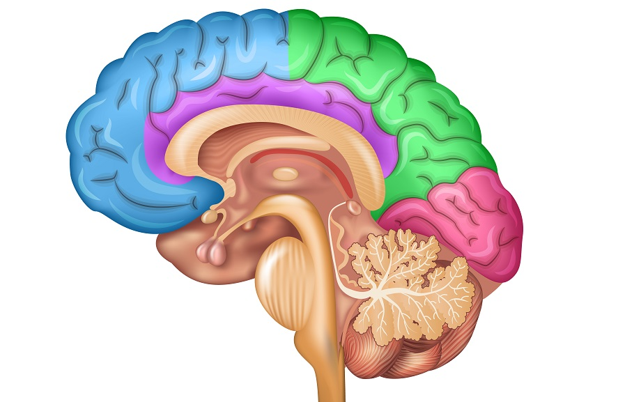 how electrical and neurochemical activity of the brain is related to behaviour essay Assessing brain activity and behaviour print how the damage may be affecting the organization of electrical activity in the brain as a related articles.