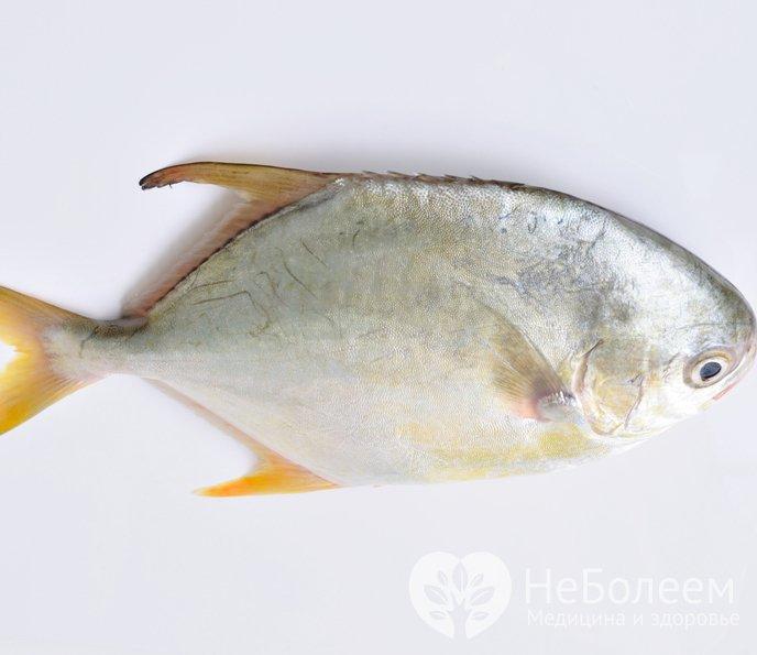 ловля рыбы на отруби