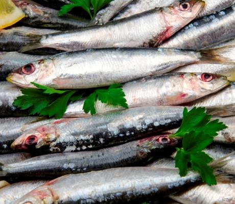 Рыба путассу полезные свойства