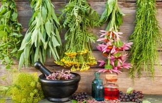6 правил приготовления домашних лекарств из растений