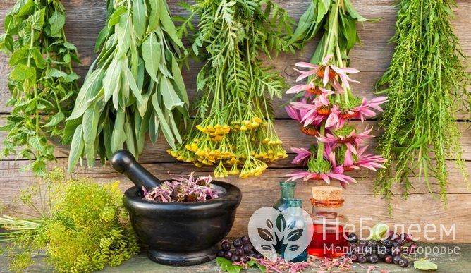 Лечение растений в домашних условиях