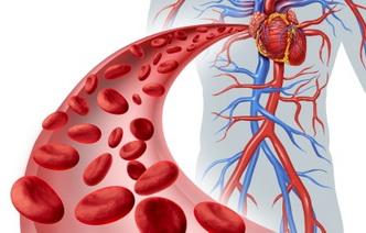 8 продуктов, помогающих улучшить кровообращение