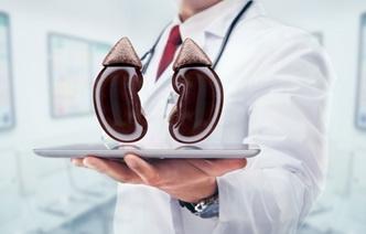 Как сохранить здоровье почек: 10 привычек, от которых необходимо отказаться