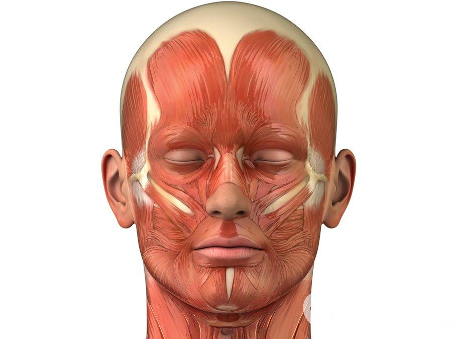 Мышцы головы